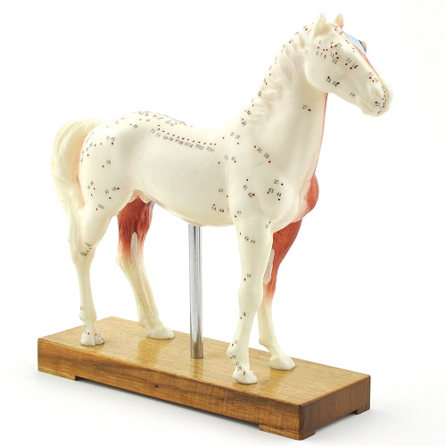 Veterinary  Acupuncture Models