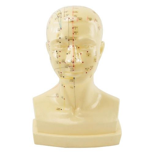 Acupuncture Head Model With Meridians